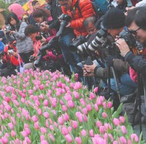 Hong-Kong-flower-show-15